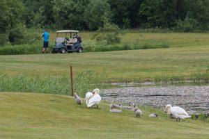 foto-paslaugos-renginiu-fotografavimas-gulbes-vaiksto-po-golfo-aikste-turnyro-metu